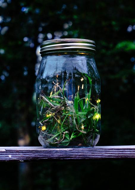 making a firefly lantern. Black Bedroom Furniture Sets. Home Design Ideas